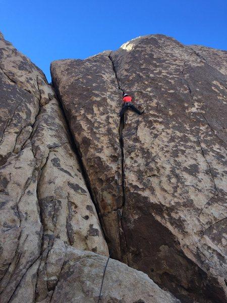 Rock Climbing Photo: classic j-tree butt shot in rock garden valley