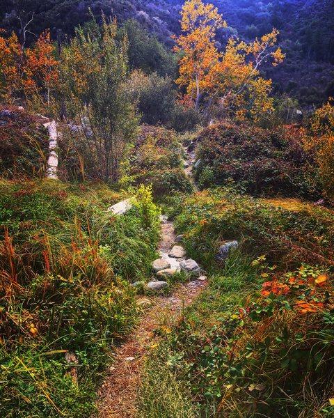 Amazing fall approach