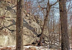 """Rock Climbing Photo: the """"crazy"""" tree - with extra sideways t..."""