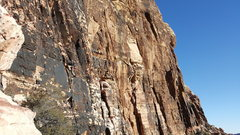 Rock Climbing Photo: Birdland pitch 1 - try to spot the climber