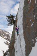 Rock Climbing Photo: Zippo's almost never forms fat enough to reaso...