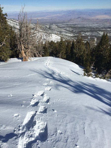 Rock Climbing Photo: Snow Shoeing at Mt. Charleston