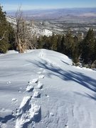 Rock Climbing Photo: Snow Shoeing at Mt. Charleston