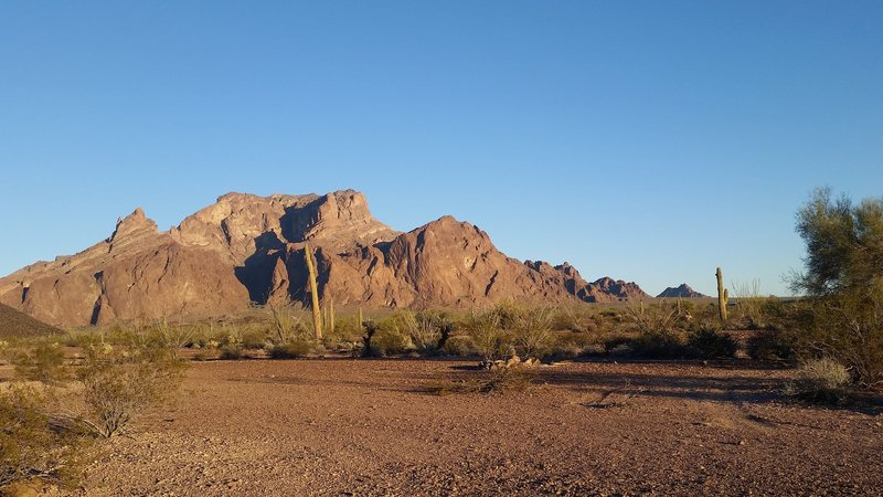 The west face of Signal Mountain, the highest point in the Kofa range of southwest Arizona.