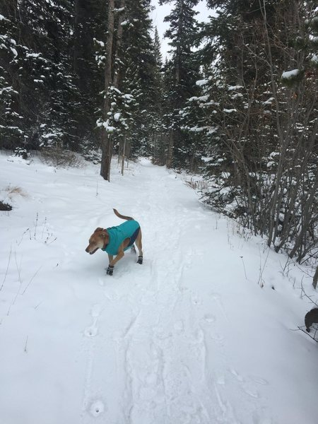 She already likes the snow...just needs to learn the ropes