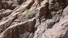 Rock Climbing Photo: Lead anchor,