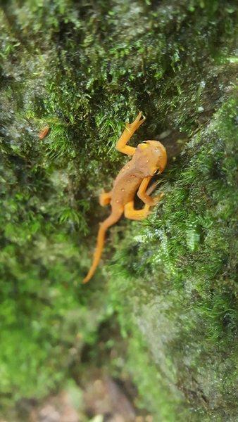 Newt at Summersville, NRG