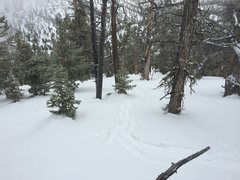 Rock Climbing Photo: variable yes !!!! good tree lines and stable pow o...