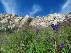 Rock Climbing Photo: nice spot in sd