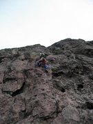 Rock Climbing Photo: Dingo Dog
