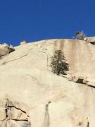 Rock Climbing Photo: Showing the tree at the start and the route.