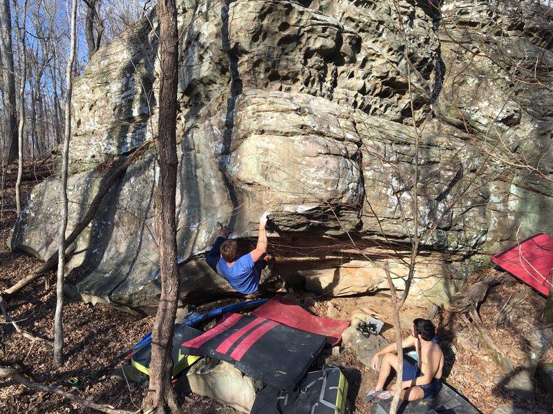 Climbing Bowfin.