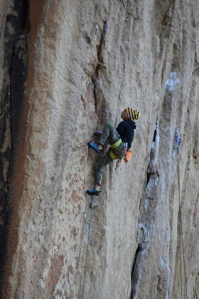 Rock Climbing Photo: Beginning the pumpy crack on Main Line
