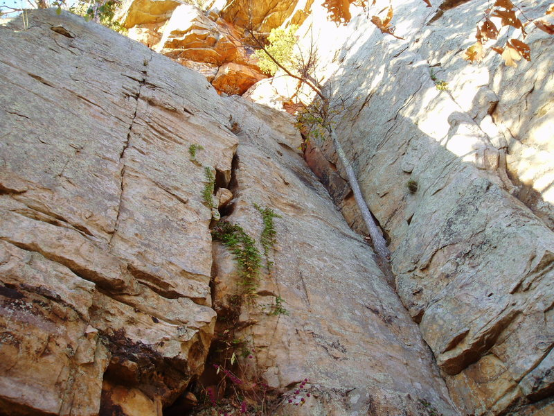 Lower section of Lets Face It (from 2005, is tree still there?)<br>