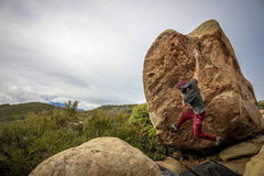 Rock Climbing Photo: Nicholas Rondilone working King Dinosaur. Photo by...