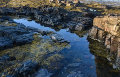 Tidal pool near Bar Harbor