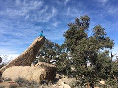 Rock Climbing Photo: Pride Rock