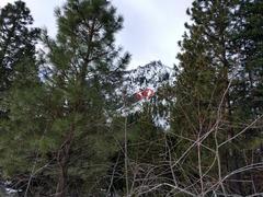 Rock Climbing Photo: Looking at Hubba Hubba falls from Icicle Creek Roa...