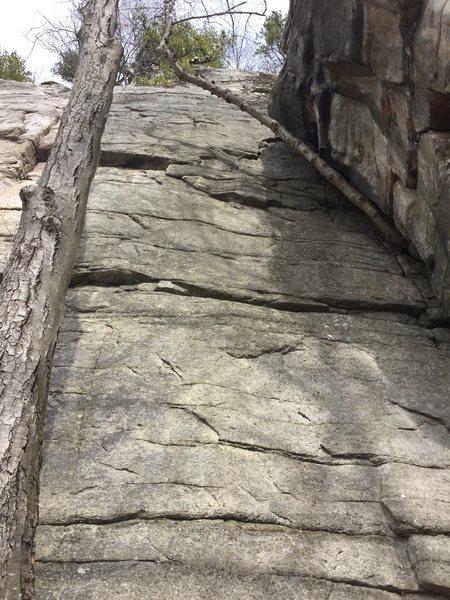 Rock Climbing Photo: Birch