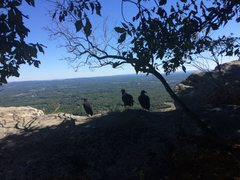 3 vultures on top of Three Vultures.