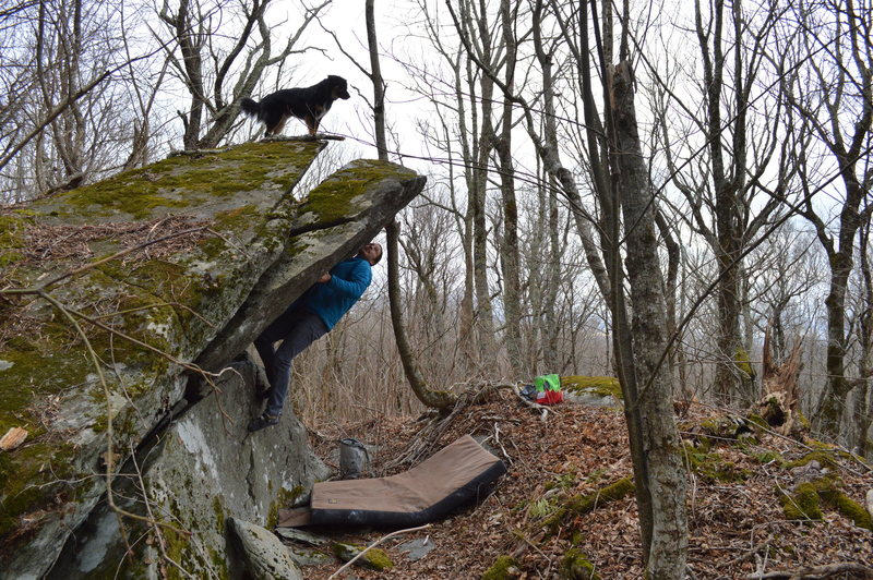 Jesse Cheers standing tall toward the top of Pop Shot. Fin the pup made getting to the top look easy.