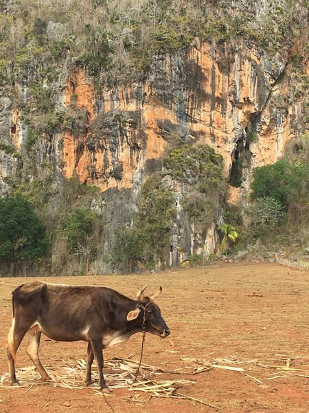 Guajiro Ecologico. The closest area to Vinales town.