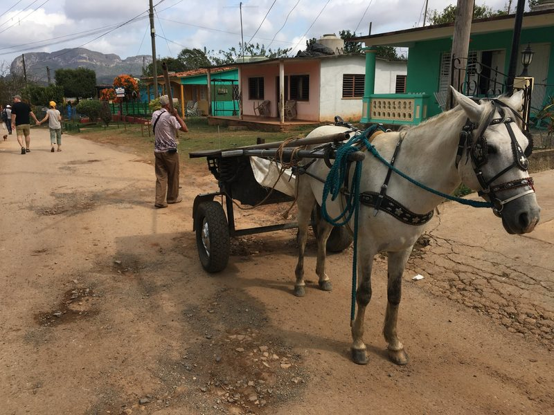 Typical quaint scene in Vinales town walking to the crags.