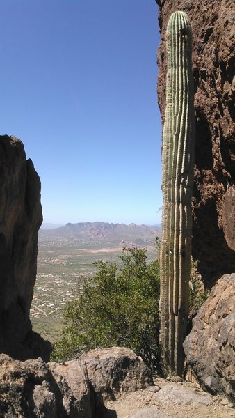 How did this saguaro get all the way up here?  This is the ledge that the big rappel starts from.