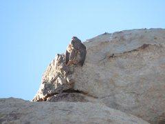 Raptor at Patagonia Pile