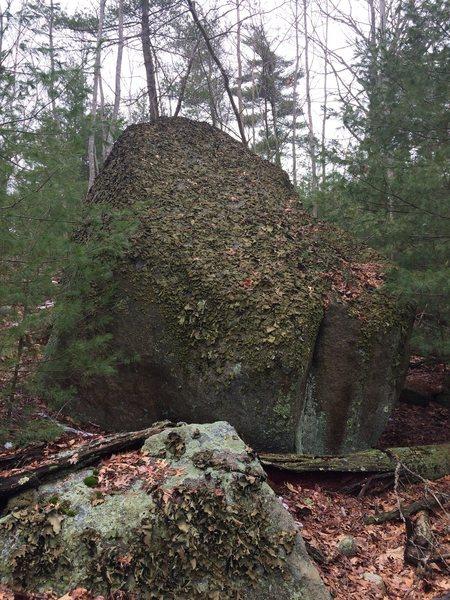 Bikini Bottom 28 - Now that's some lichen!