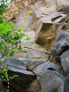Rock Climbing Photo: Burgermeister