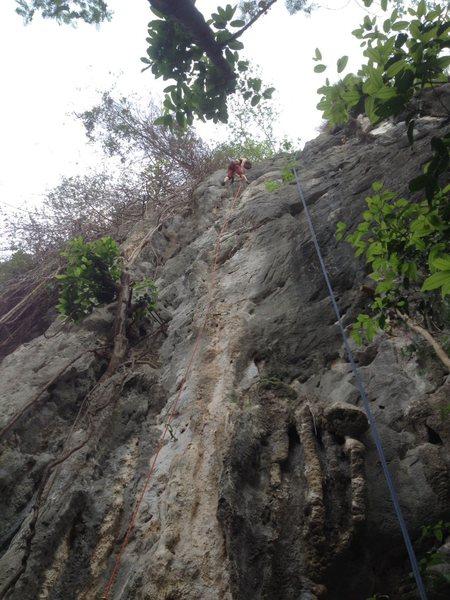 Judy finished leading &@POUND@39@SEMICOLON@Ooh La La&@POUND@39@SEMICOLON@ 5.10b/c, Covert Crag, Dong Lan Forest, Khon Kaen