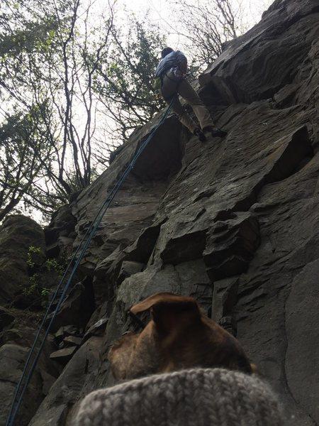 Concerned canine cautiously contemplates climber.