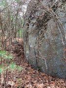 Rock Climbing Photo: Bikini Bottom 45 - The Pineapple.