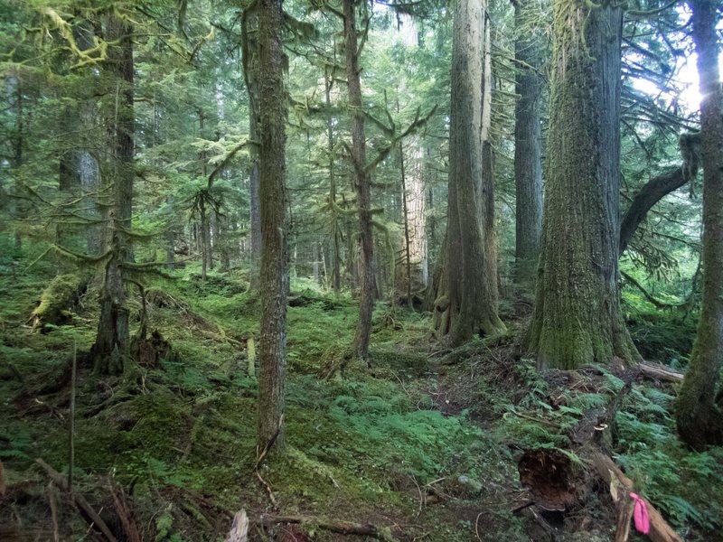 Chilliwack river trail