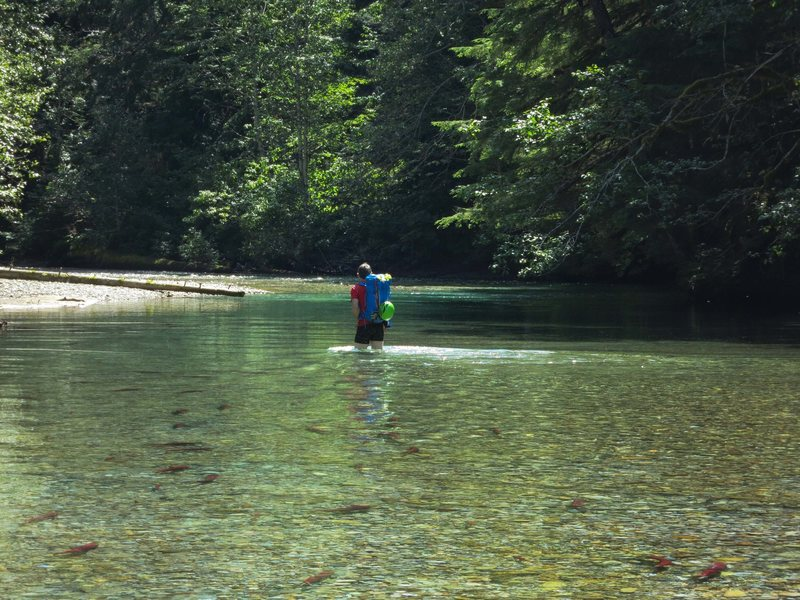 Chilliwack river wading approach