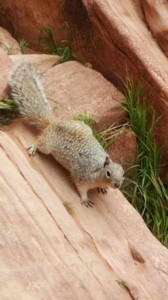 Rock Climbing Photo: Squirrel on Physical Graffiti