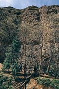 Orangutan Wall seen from the trail.