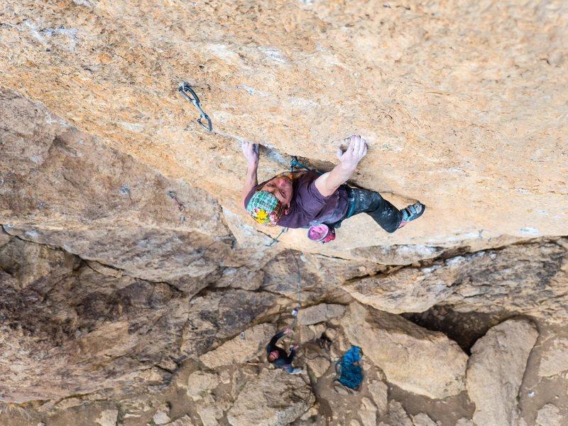 A gyps goes sport climbing