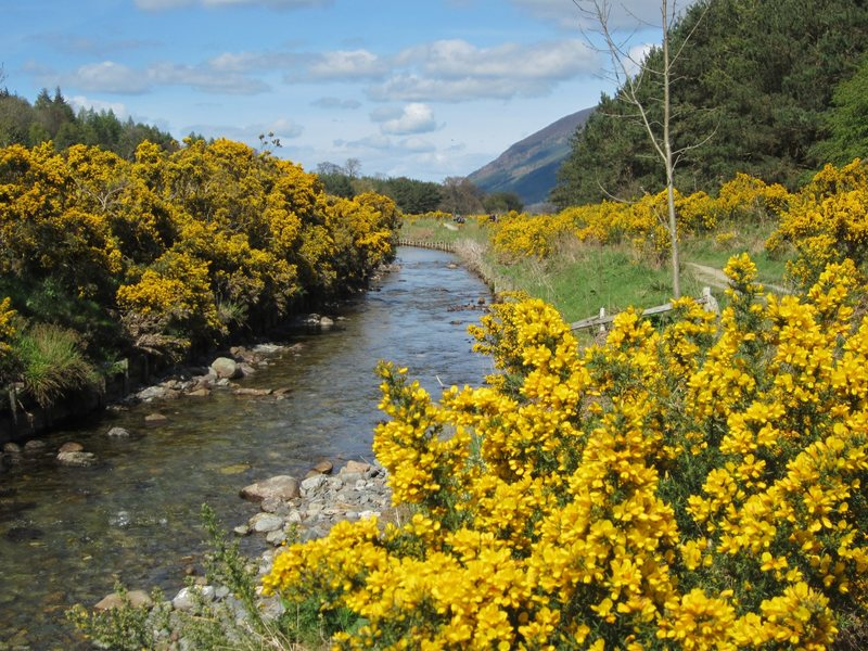 Rock Climbing Photo: Little river and Gorse Bushes