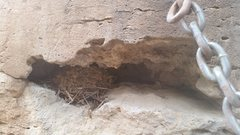 Rock Climbing Photo: There is a nice nest at the anchor! Please don&#39...