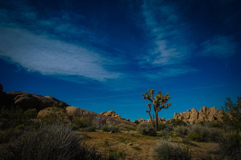 jtree desert
