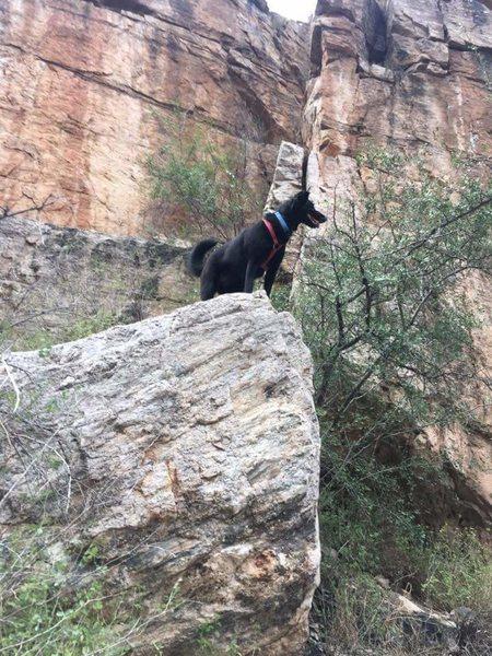 My majestic crag dog!