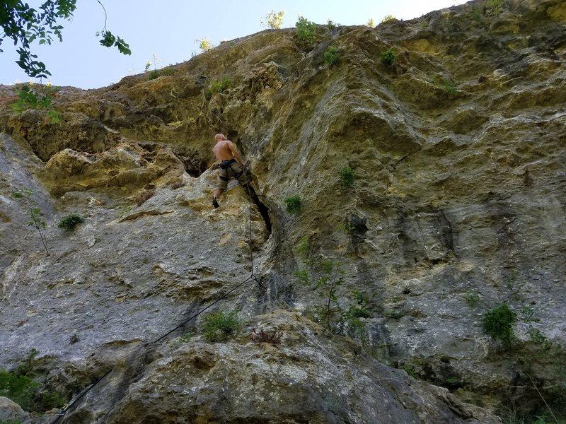 Climbing insane tree hugger