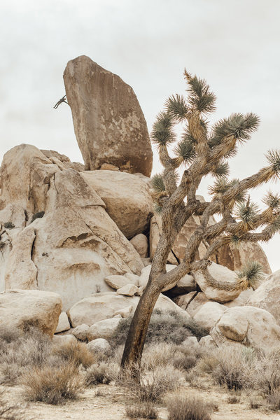 Joshua Tree Headstone