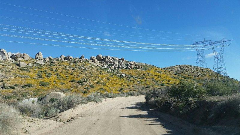 Rock Climbing Photo: Spring has sprung, San Bernardino Mountains  Photo...