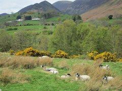 Rock Climbing Photo: sheep