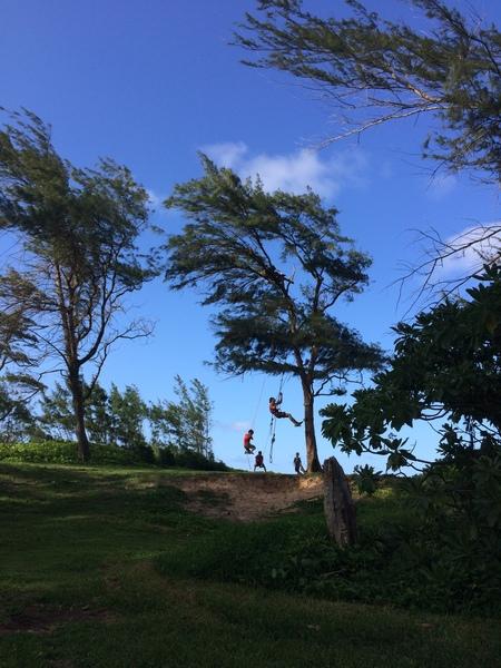 Rec. tree climbing