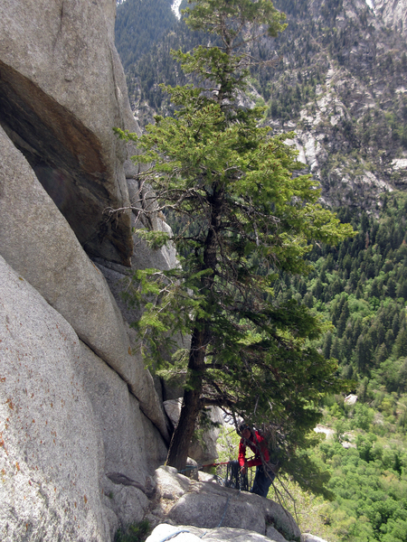 Rock Climbing Photo: The awkward belay from the pine tree at the right ...