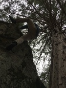 Rock Climbing Photo: Topping out under the branches.